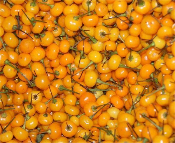 Aji Charapita Dried Pods