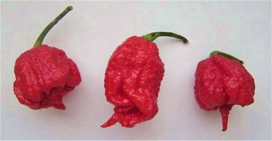 10 Kilogram - 22 Pounds Dried Carolina Reaper Pods
